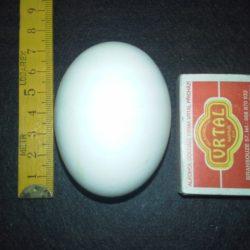 Kachní vejce - Rohozenská husa